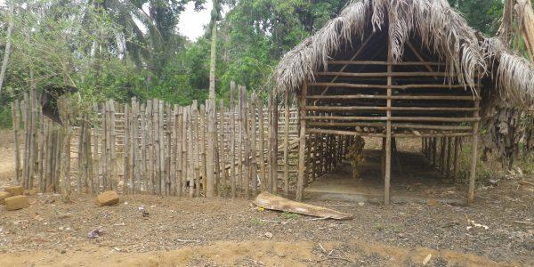 IMGP4566.TCS_goat_project_in_Lawana village (1)