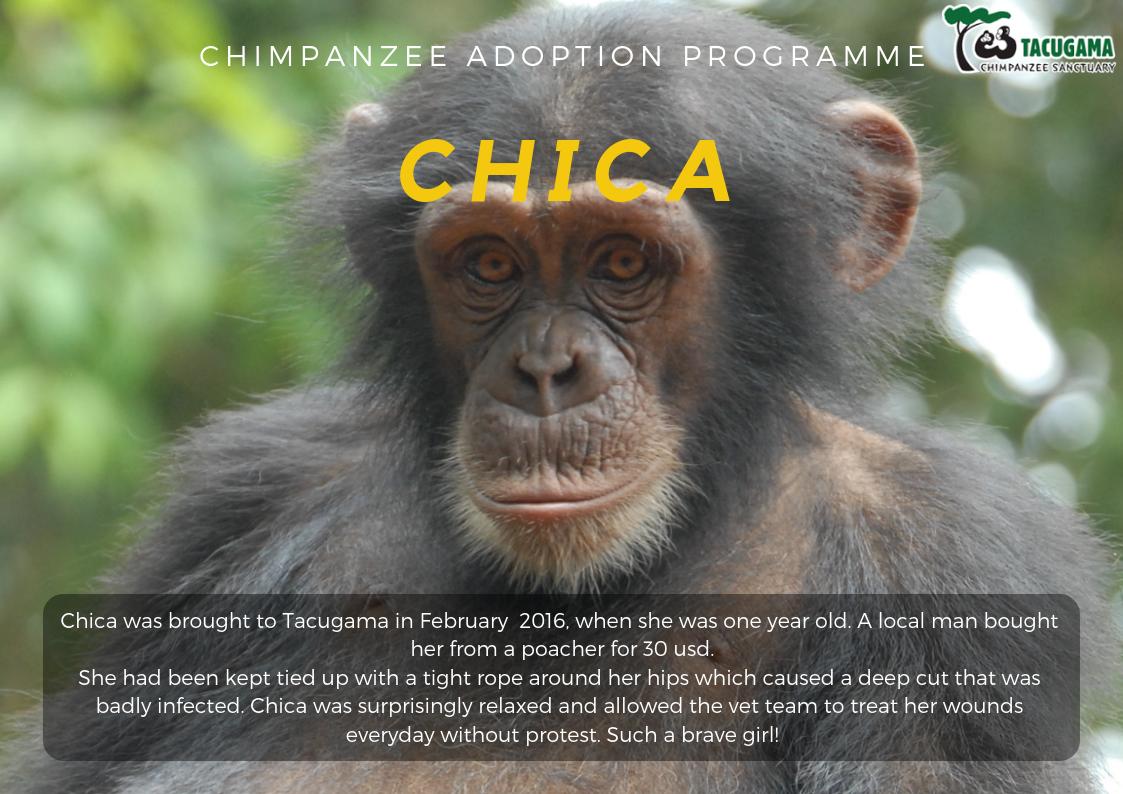 Chica Adoption program