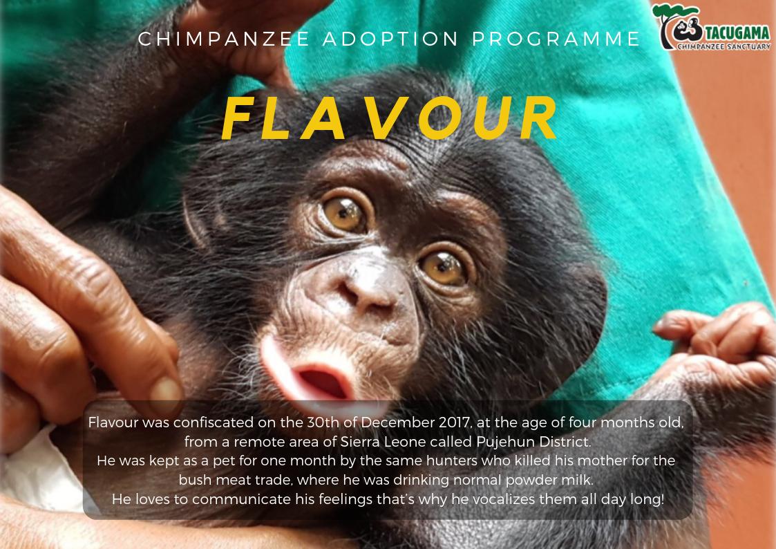 Flavour Adoption program