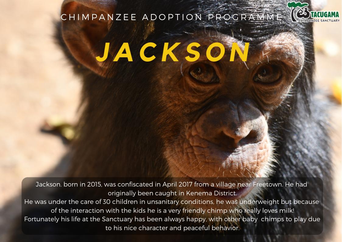 Jackson Adoption program
