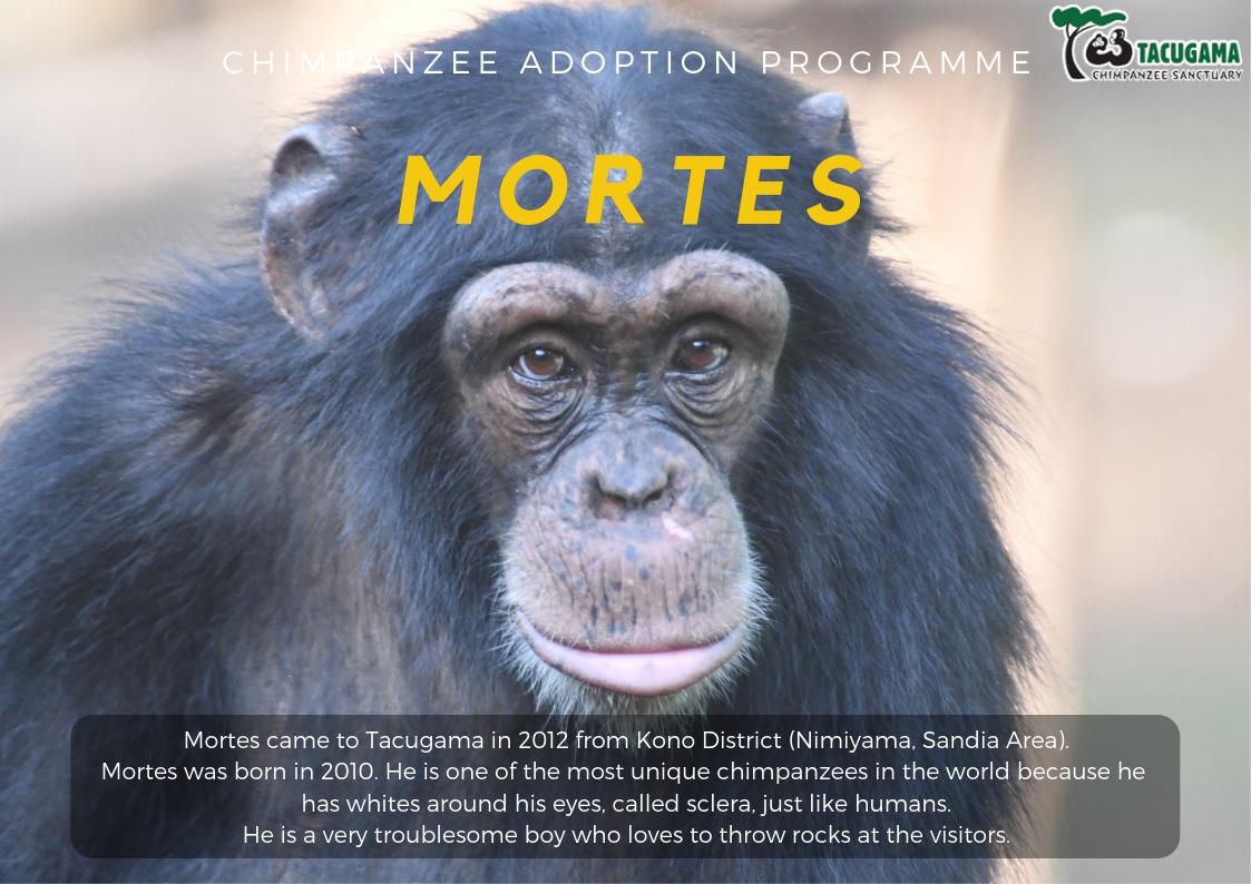 Mortes Adoption program