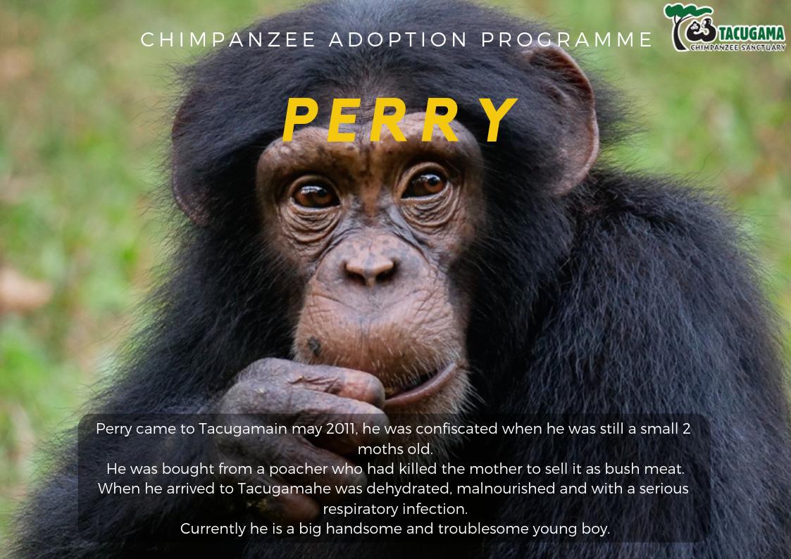 Perry Adoption program