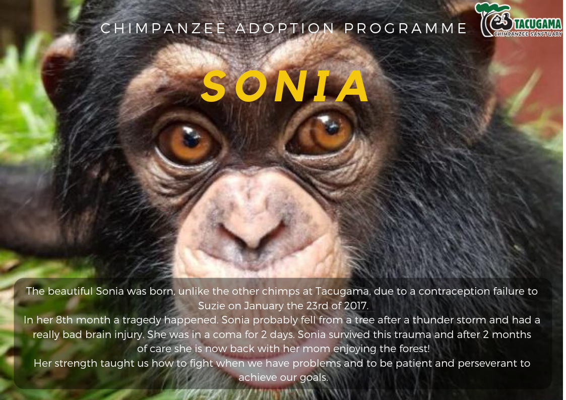 Sonia Adoption program