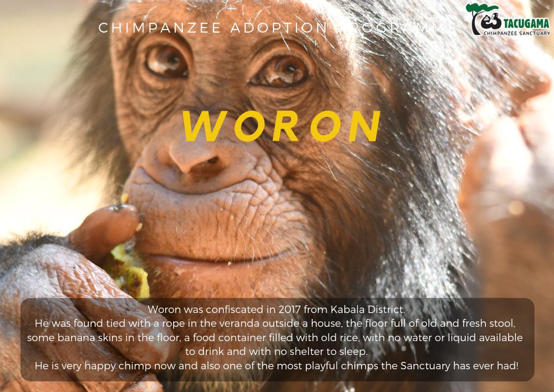 Woron Adoption poster