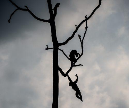 Silhouette Swinging
